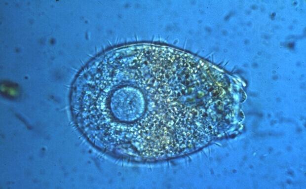 Mikroorganismus in der grauen Gentechnik
